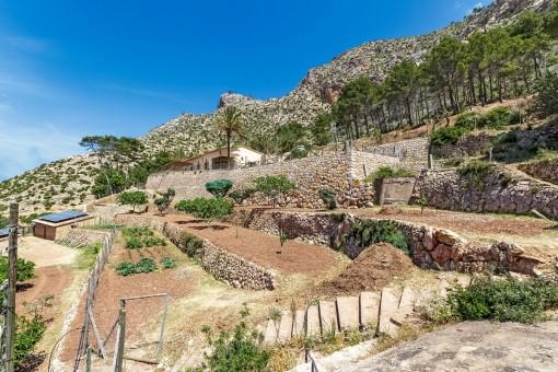 Views over the garden area