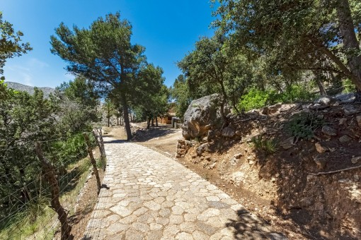 Path leading to the finca