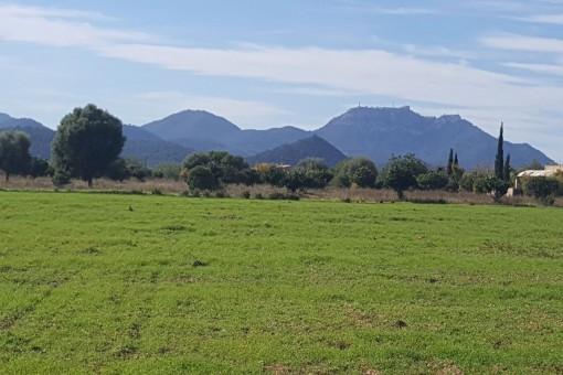 Tomt i Cales de Mallorca