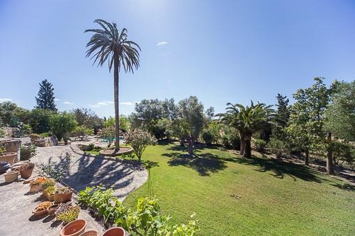 Well-kept mediterranean garden
