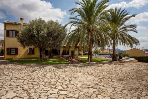 Garten with palms
