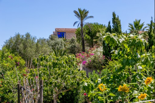 Views from the garden to the finca