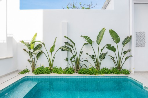 Wonderful swimming pool with green plants