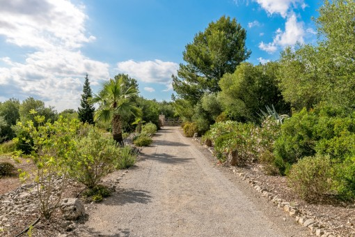 Attractive driveway to the finca