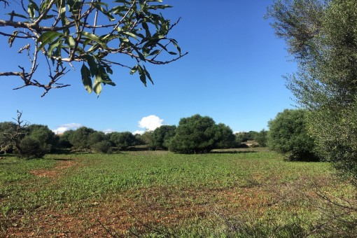 Beautiful large plot in tranquil surroundings close to Santanyi